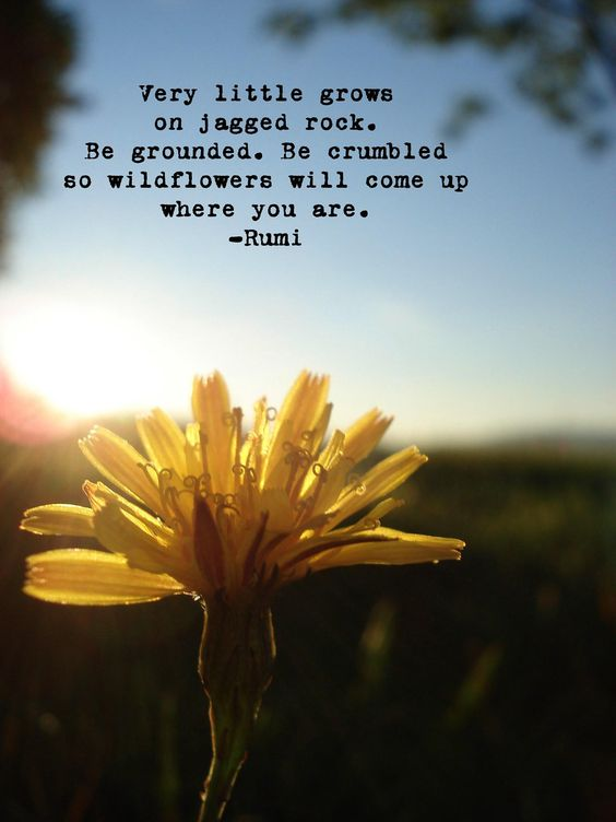 rumi quotes - Very little grows on jagged rock. Be grounded. Be crumbled so wildflowers will come up where you are.