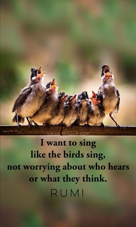rumi quotes - I want to sing like the birds sing, not worrying about who hears or what they think.