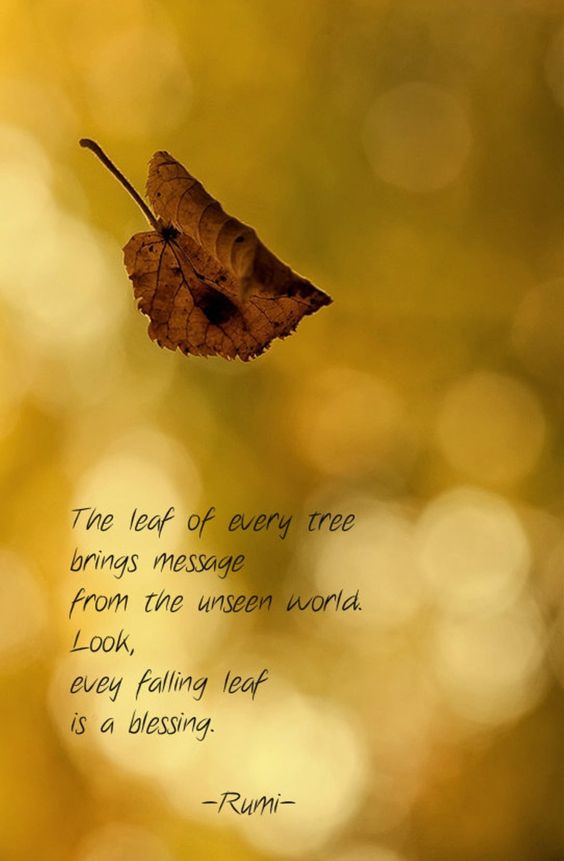 rumi quotes - The leaf of every tree brings message from the unseen world. Look, every falling leaf is a blessing.